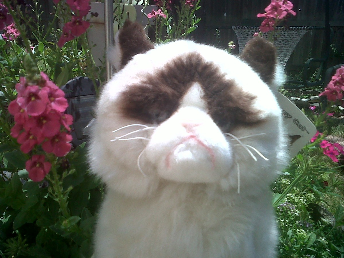 Grumpy Cat in the Garden