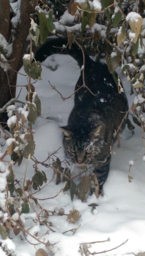 Cat in snow.