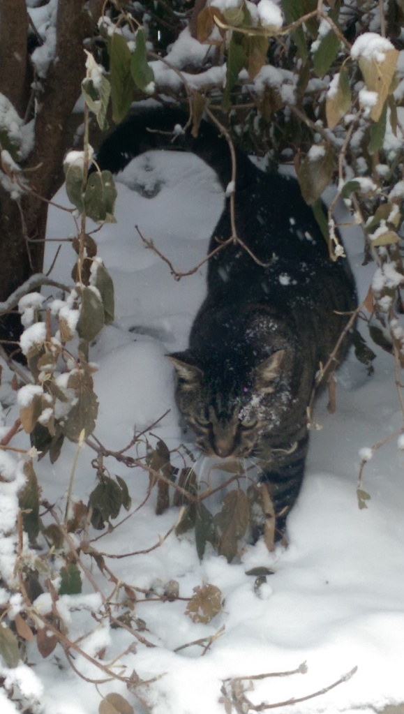 Cat in snow.