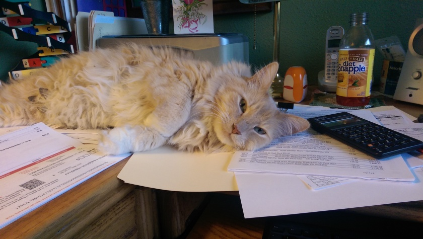 Cat on desk.