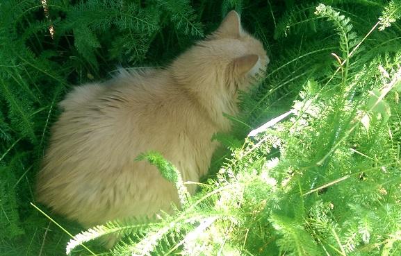Cat nesting in plants.