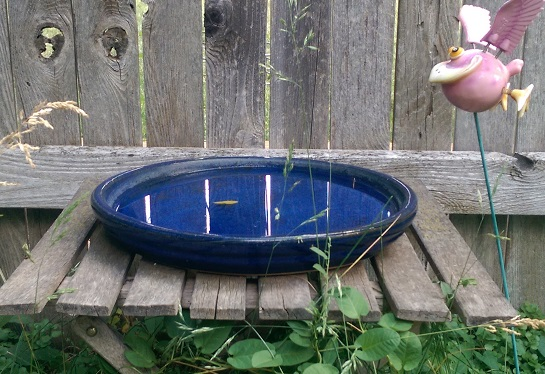 Cat water dish.