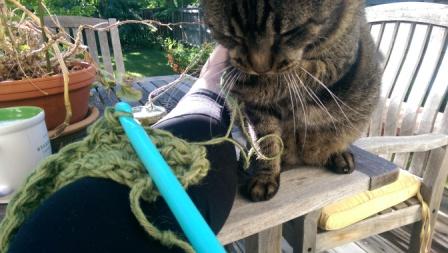 Cat attacking yarn.