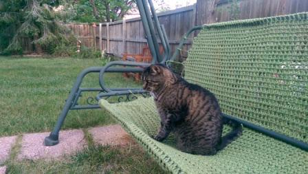 Cat on swing.