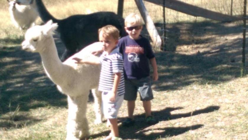 Boys and alpaca