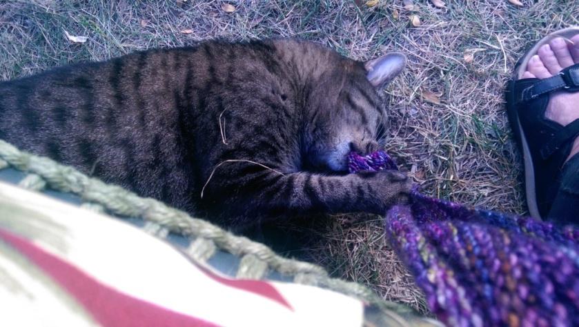 Cat chomping shawl