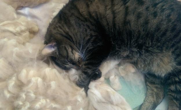 Cat asleep in alpaca fleece
