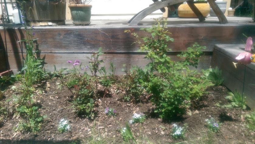 Finished Rose Garden