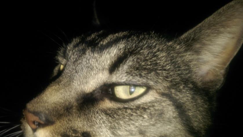 Cat stink eye