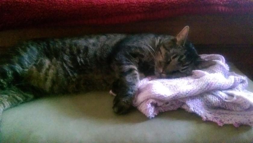 Cat asleep on shawl