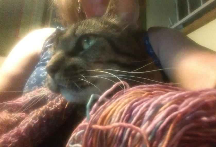 Cat and Yarn
