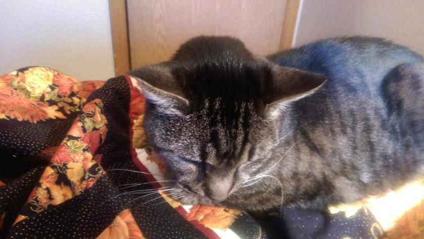 Cat on quilt.