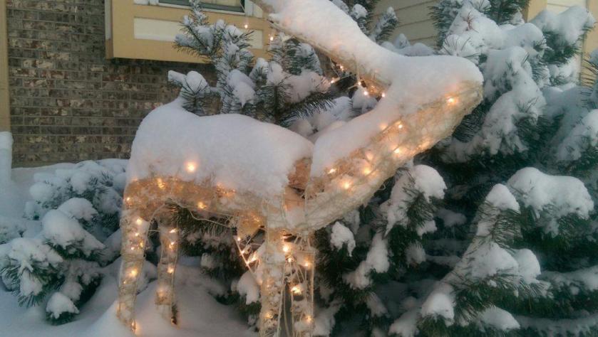 Frozen Reindeer