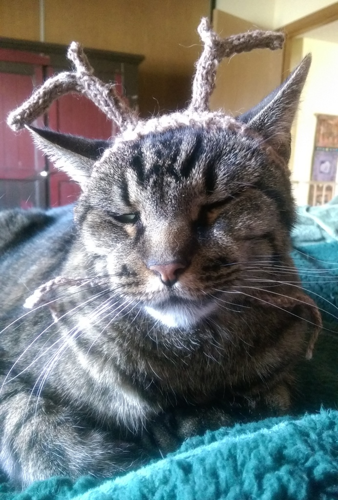 Cat with reindeer antler hat