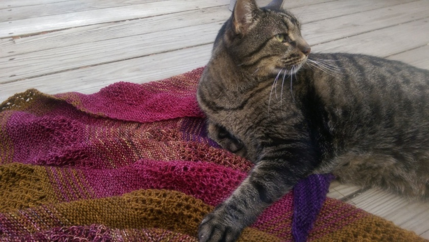 Cat with Shawl