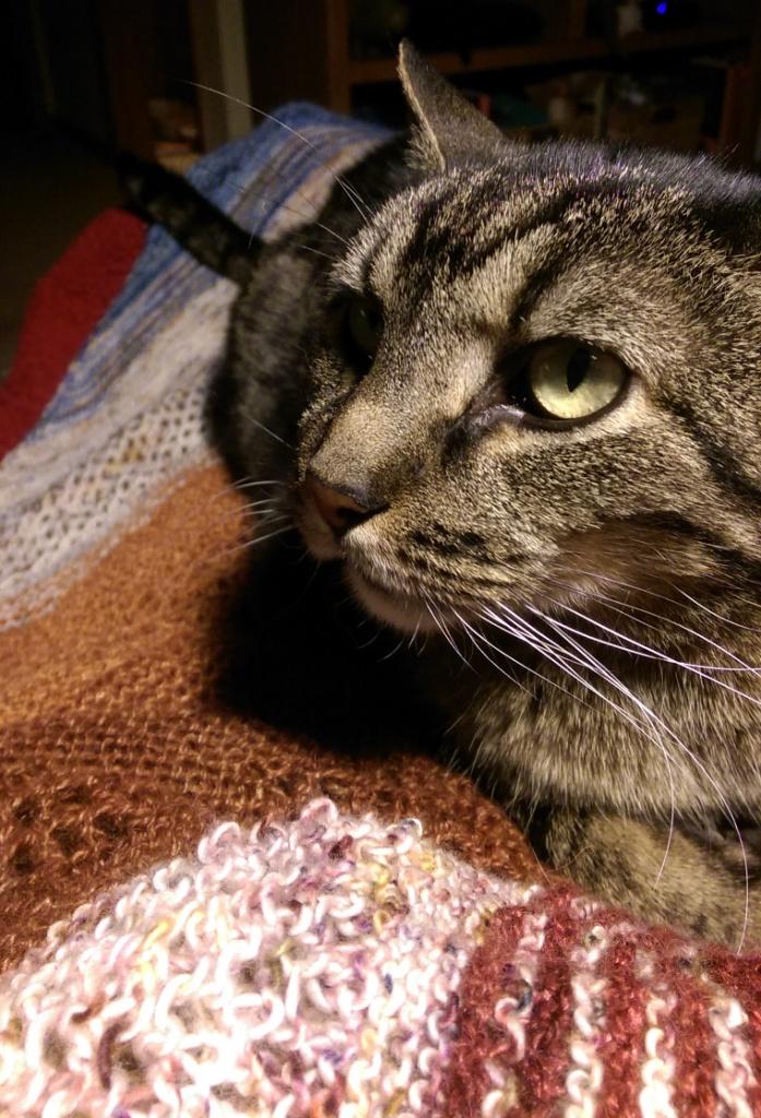 Cat helping knit shawl