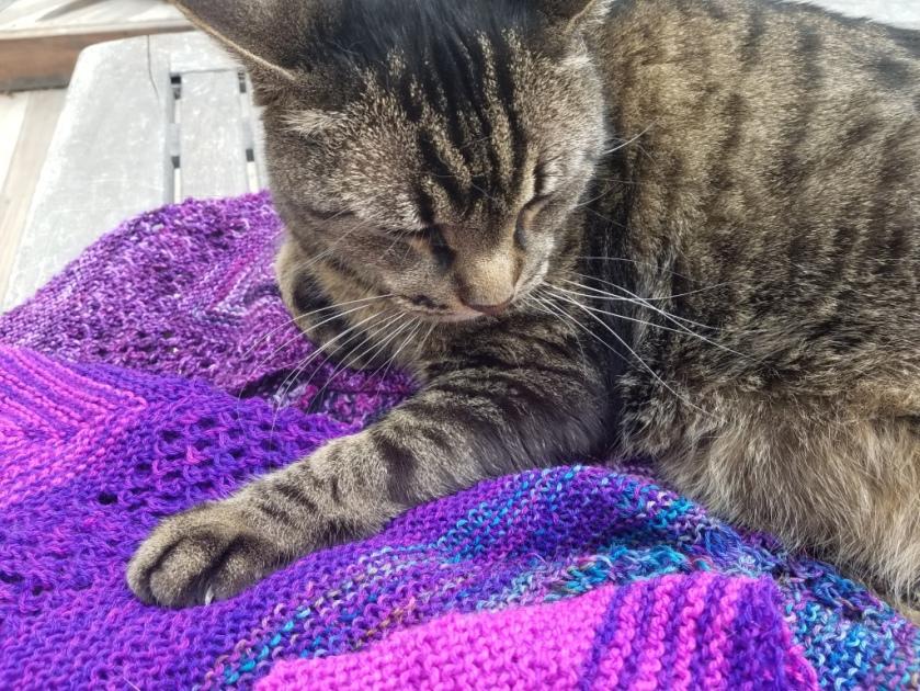 Cat on shawl