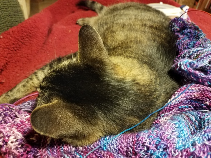 Cat sleeping on knitting