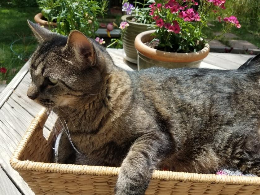 Cat in empty WIP basket.