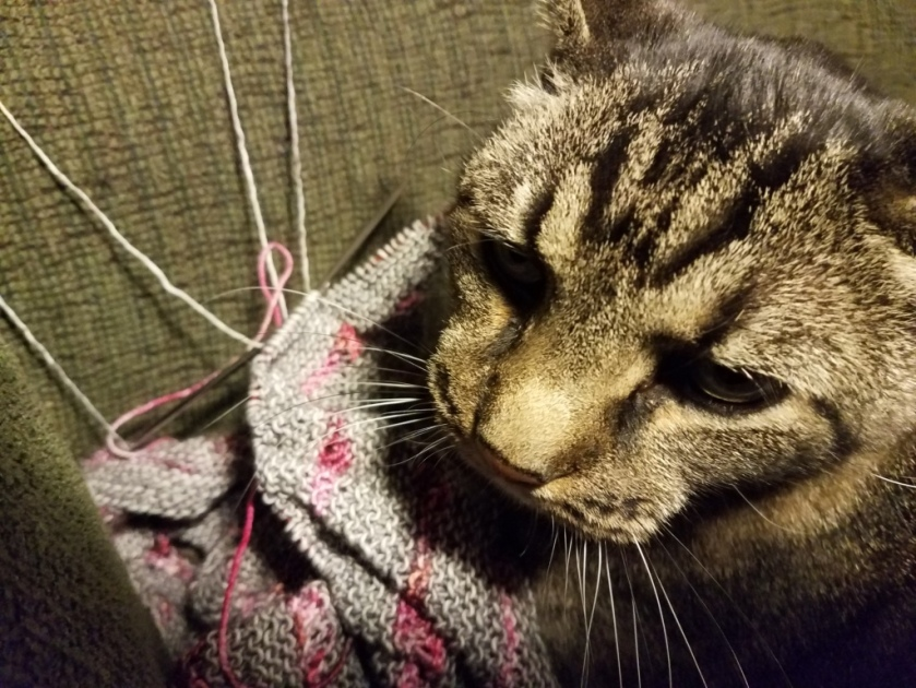 Cat and knitting.