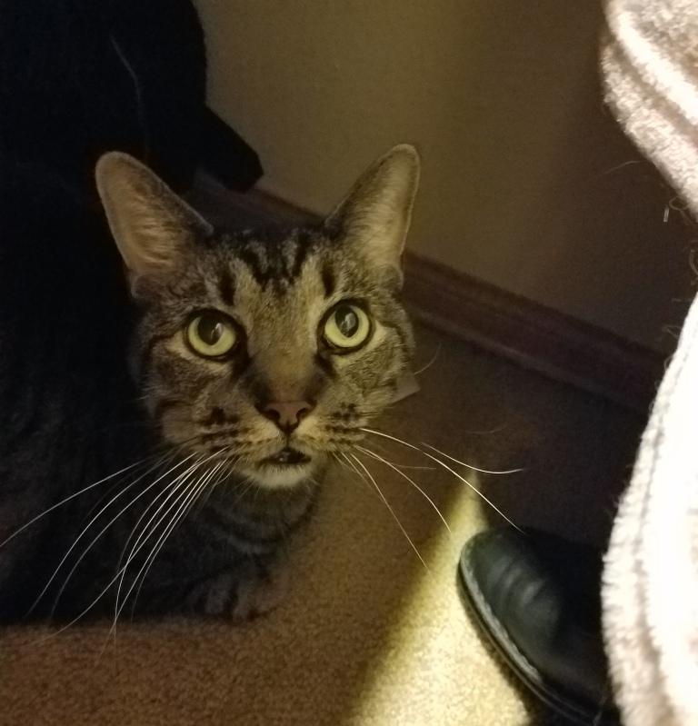 Cat in the Closet