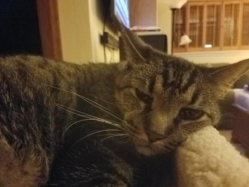 Sad cat.