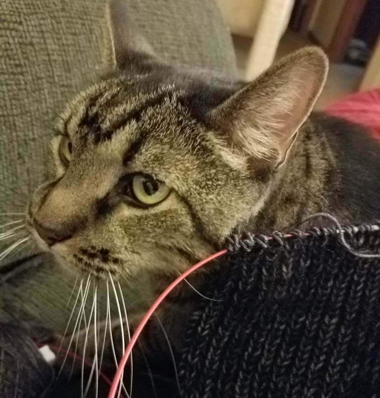 Cat with knitting.