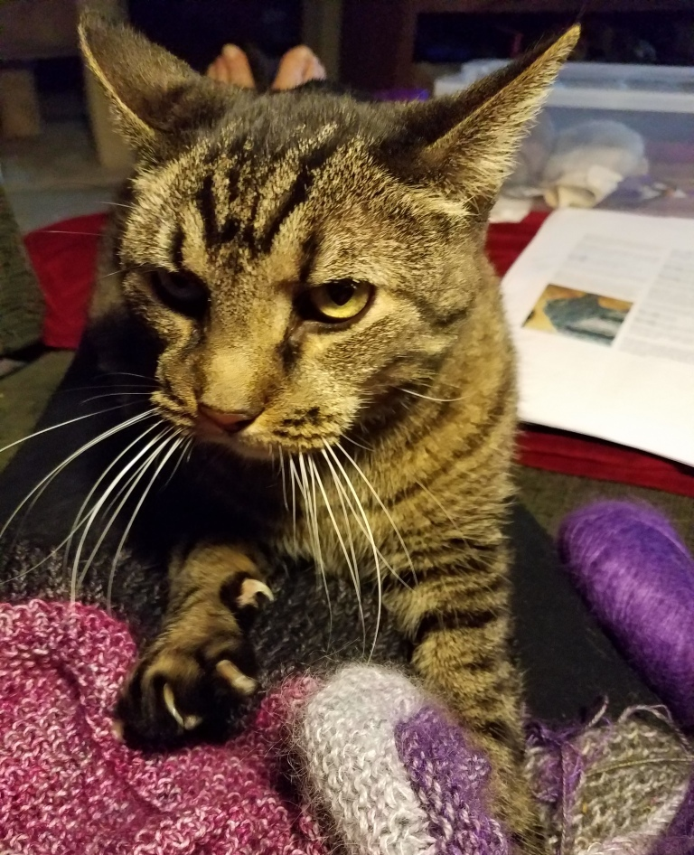 Cat kneading knitted item.