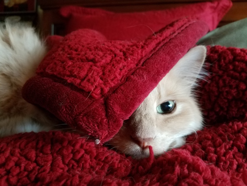 Cat peaking from under blanket.