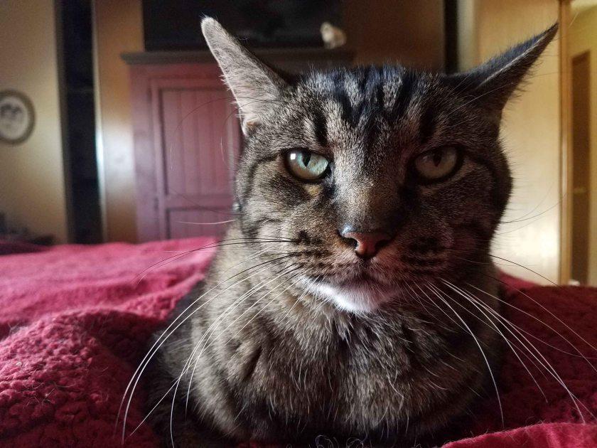 Upset cat