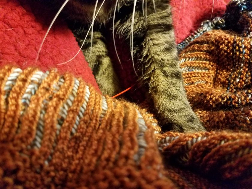 Cat paws in the knitting.