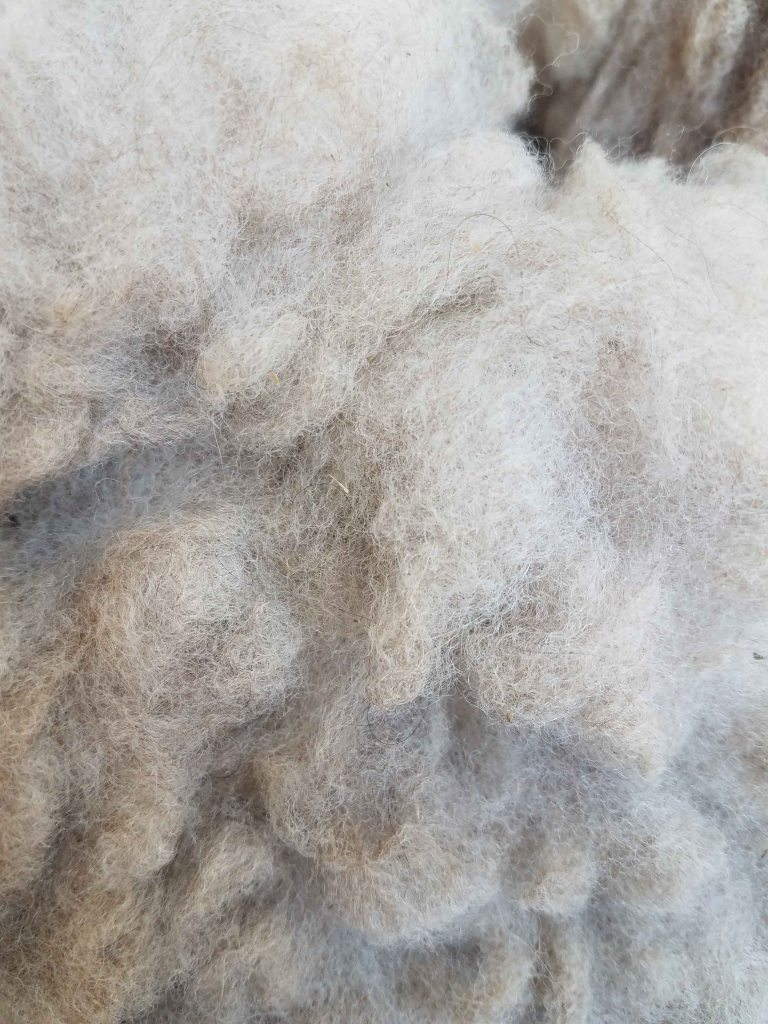 Alpaca fleece.
