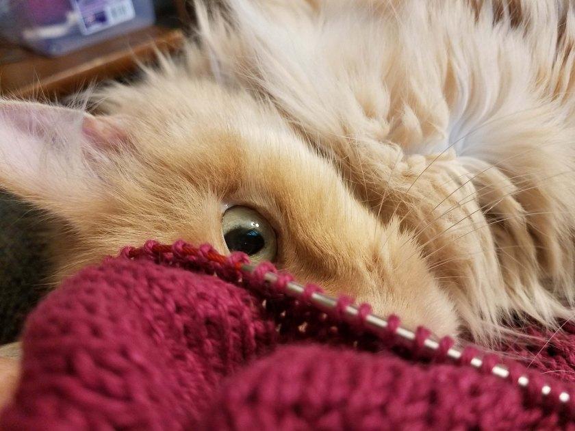 Knitting and cat eye.