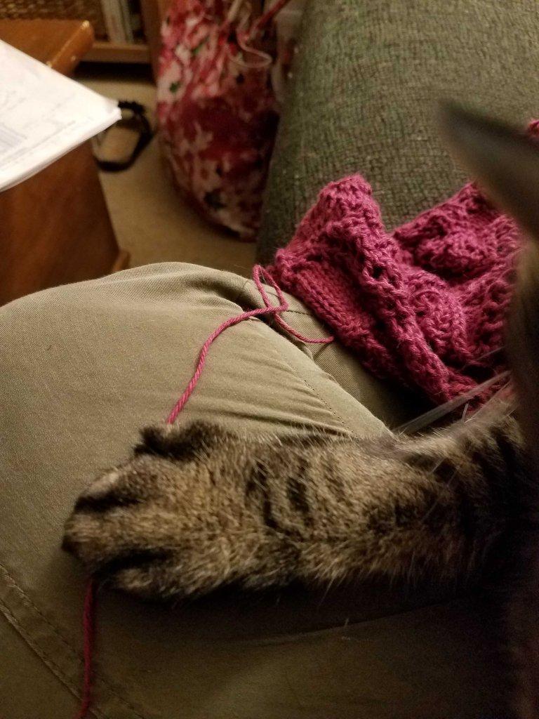 Paw on yarn.