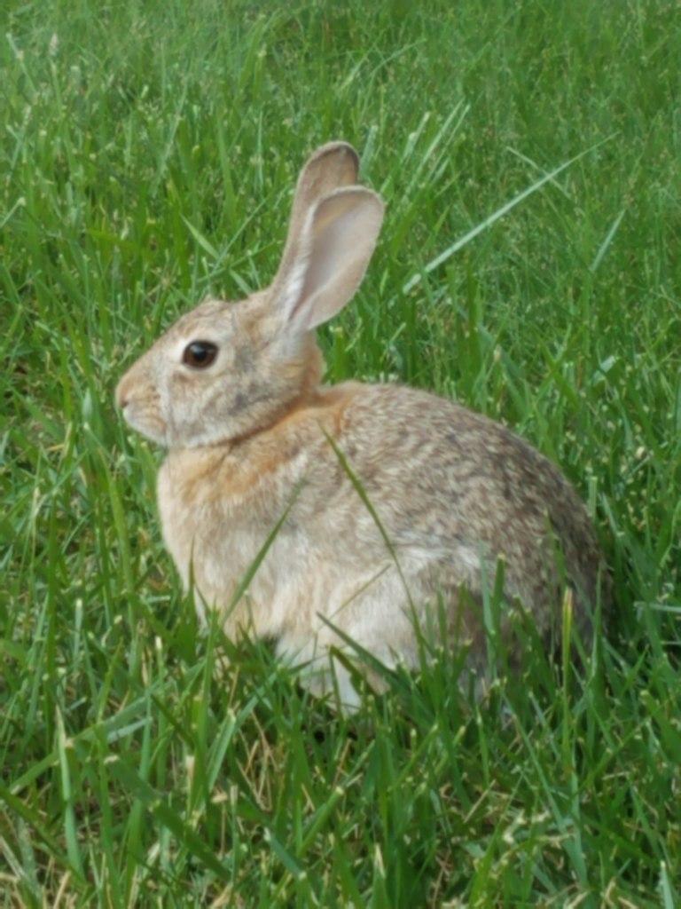 Wild bunny.