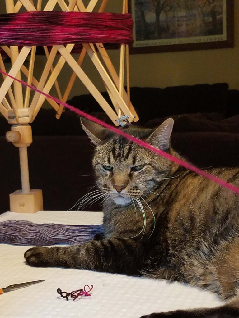 Yarn winding cat.