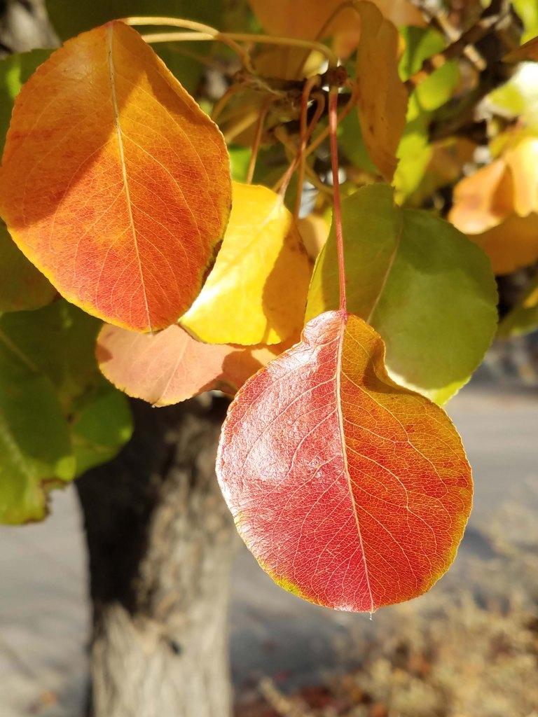 Leaves.