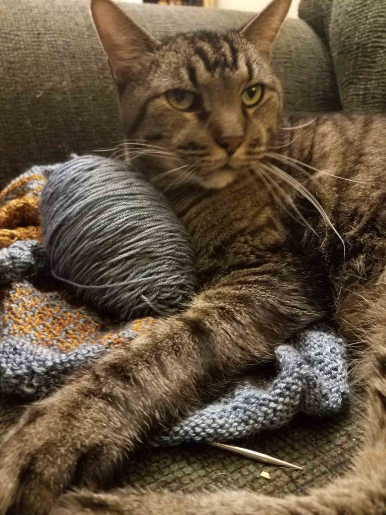 Cat on sweater.