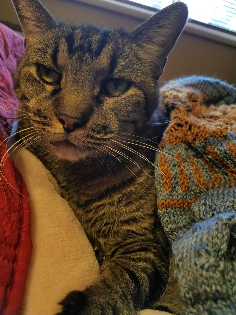 Cat and sweater