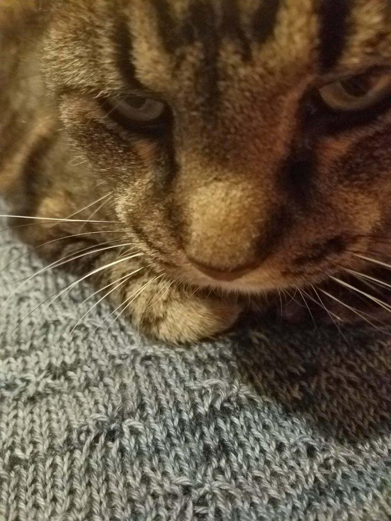 Cat on sweater