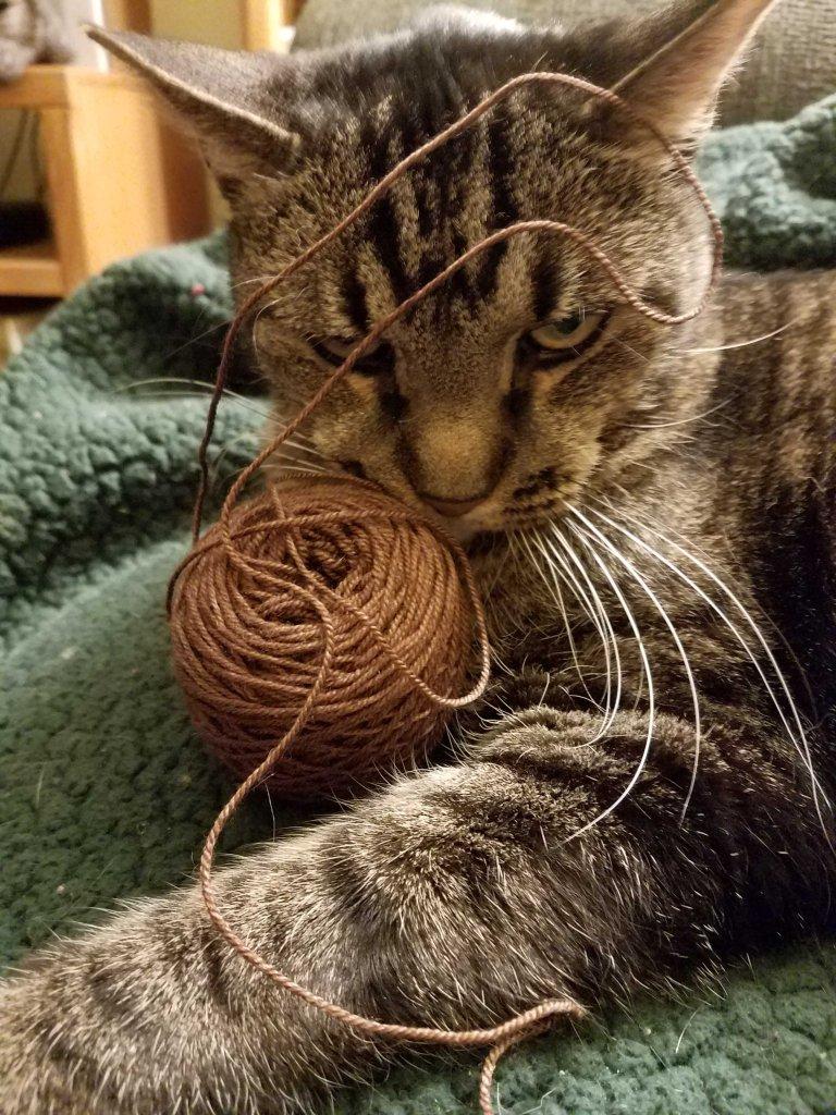 Yarn and cat.