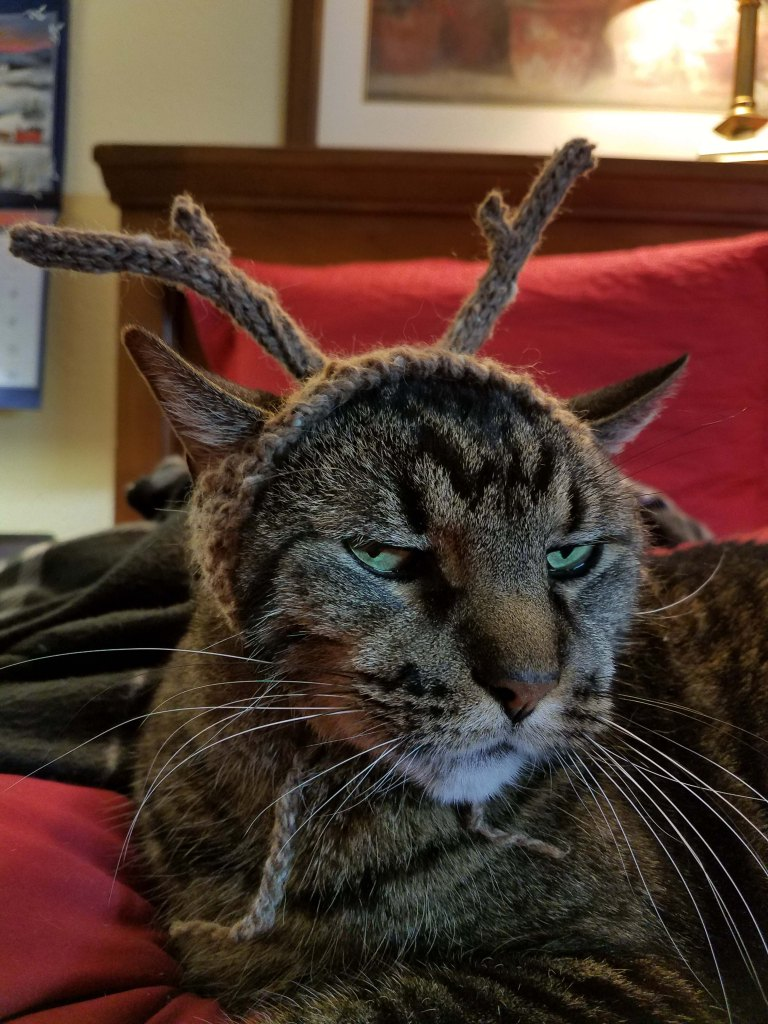 Cat wearing antlers.