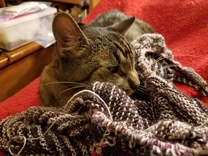 Cat sleeping in shawl.