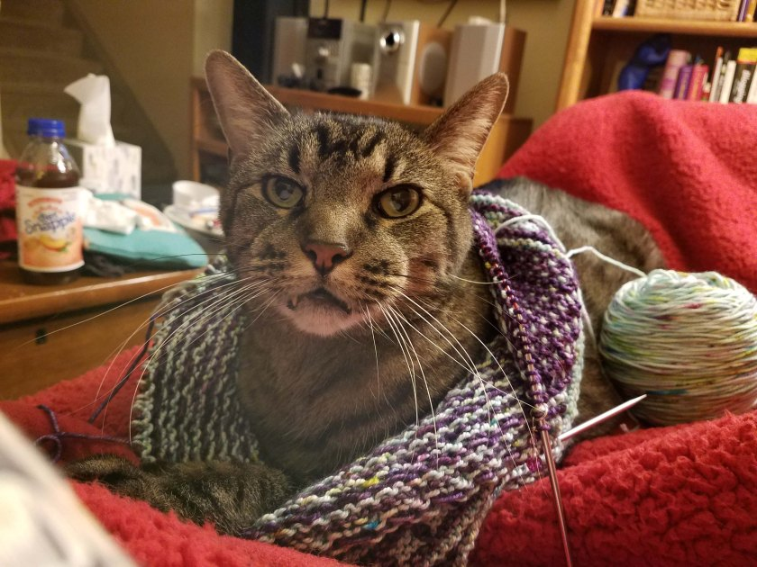 Cat wearing knitting.