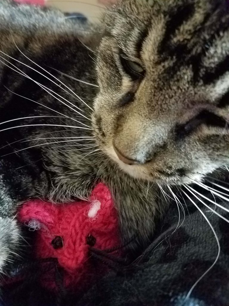 Cat with toy mouse.
