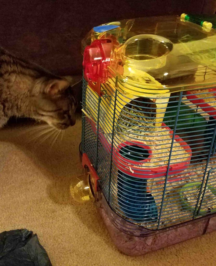 Curious and willful cat examining cage.