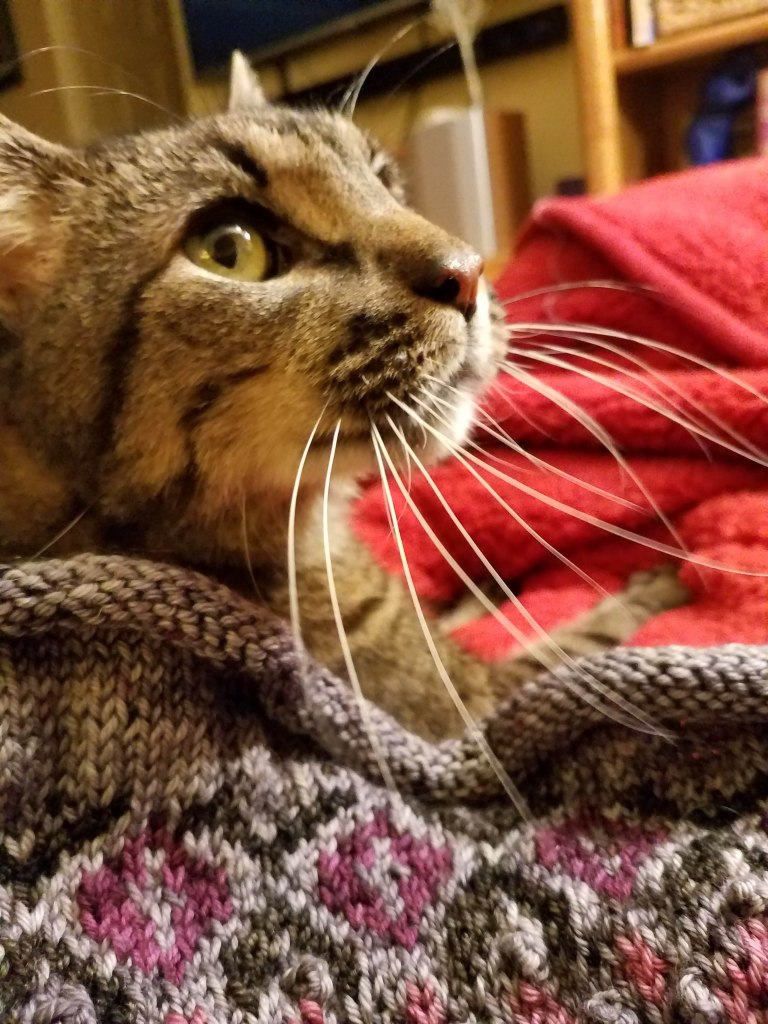 Happy cat wearing knitted project.
