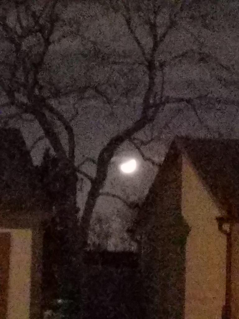 Moon shining through a tree.