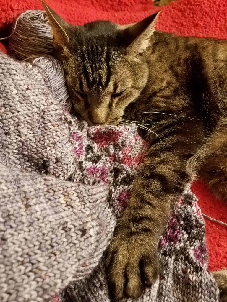 Ornry cat snoozing on knitting with his paws on the work.