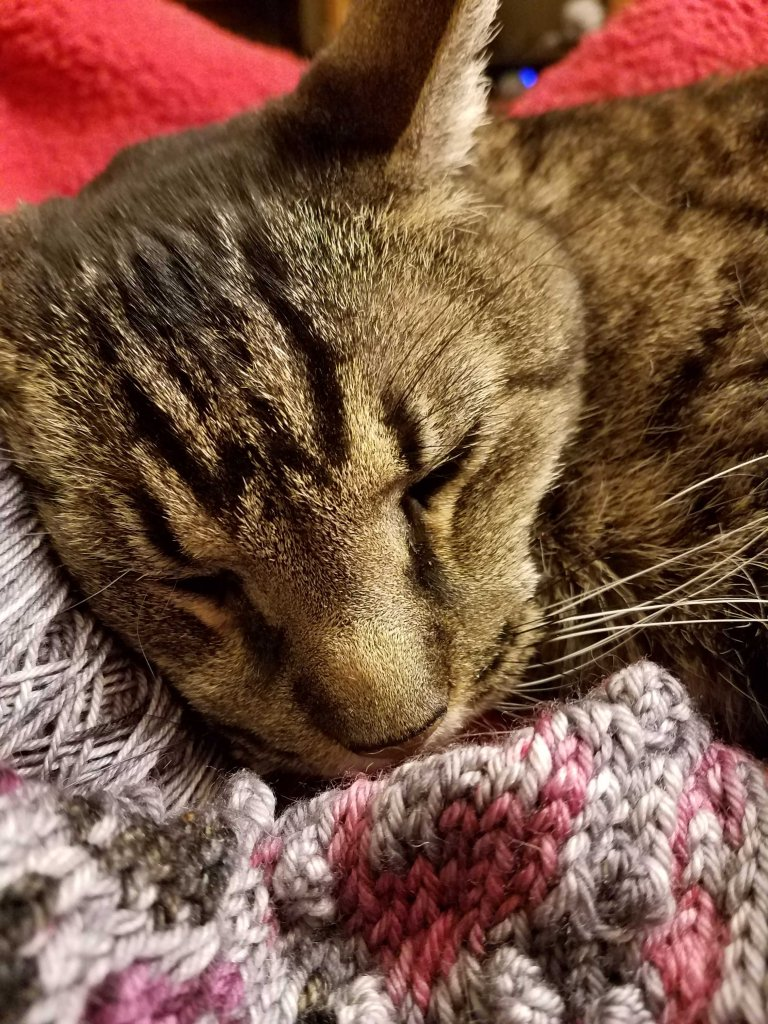 Ornry cat snoozing on beautiful Fair Isle knitting.